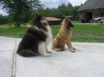 Bruno koos Tolmariga