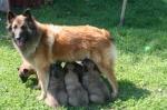 Mamma Brenda toitmas kutsikaid