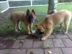 Poisid koos söömas