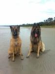 Brenda ja Tiiger mereääres